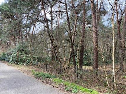 Mooi stuk bosgrond te koop in Brecht